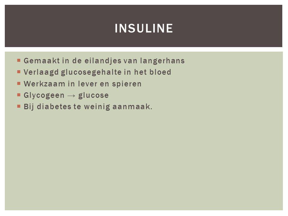  Gemaakt in de eilandjes van langerhans  Verlaagd glucosegehalte in het bloed  Werkzaam in lever en spieren  Glycogeen → glucose  Bij diabetes te weinig aanmaak.
