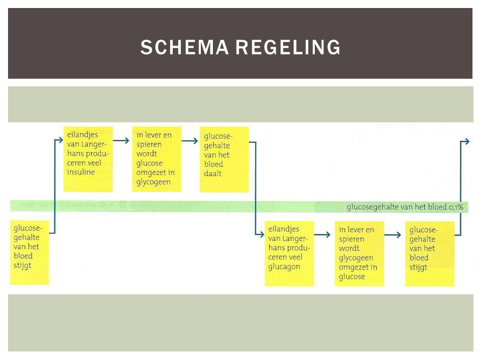 SCHEMA REGELING