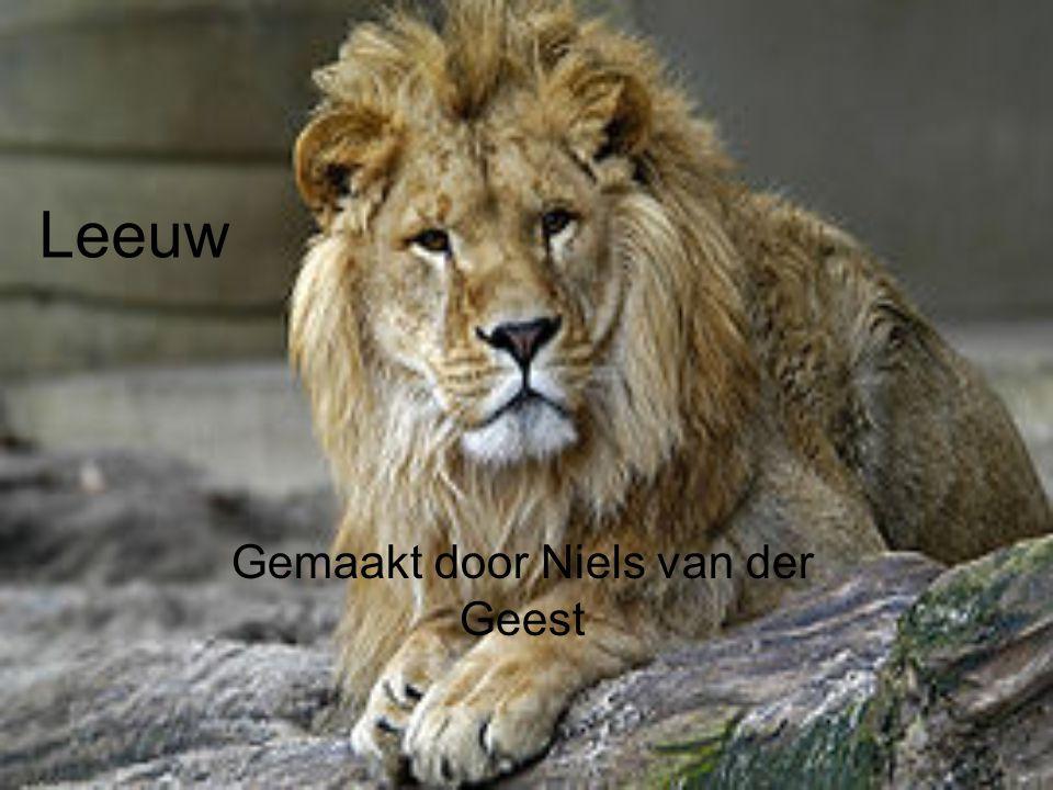 Leeuw Gemaakt door Niels van der Geest