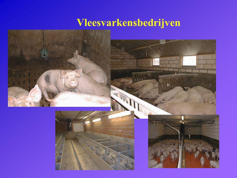 Vleesvarkensbedrijven