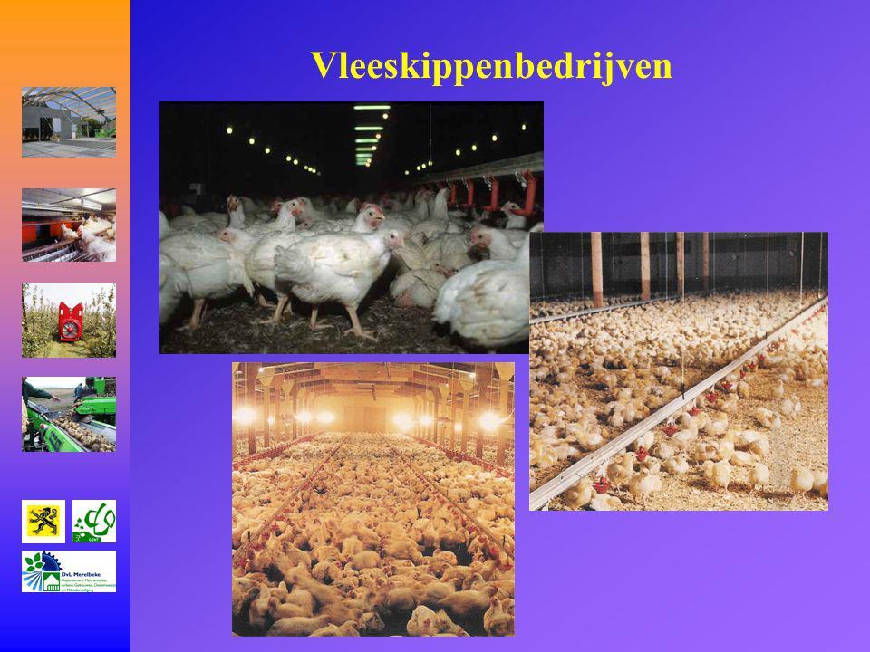 Vleeskippenbedrijven