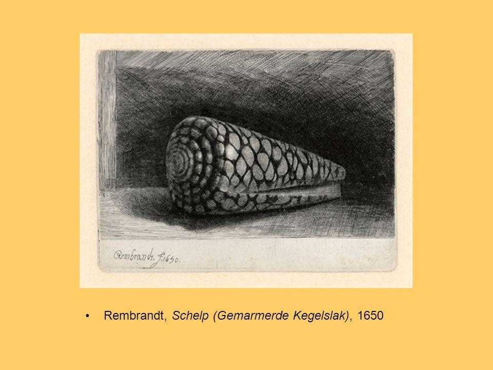Rembrandt, Schelp (Gemarmerde Kegelslak), 1650