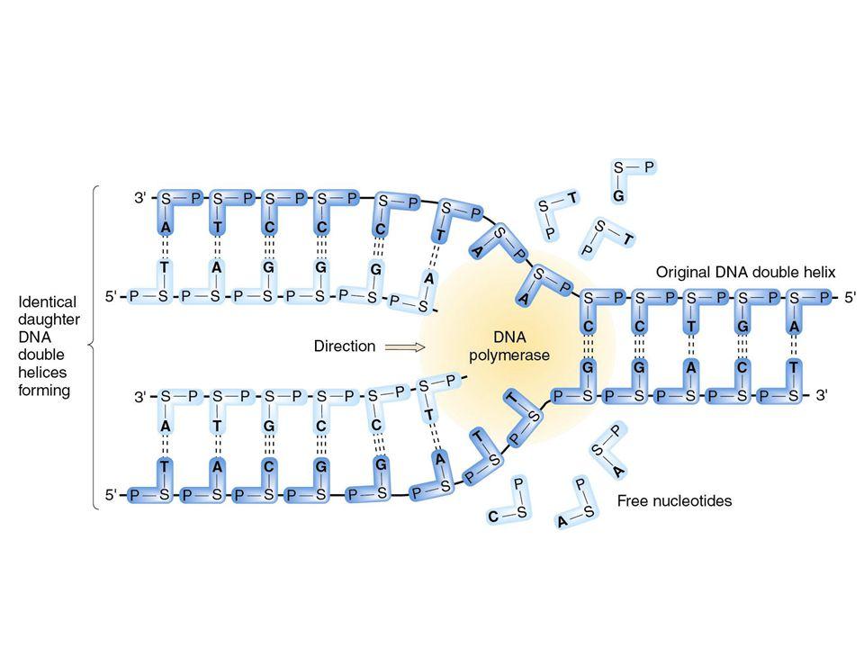 DNA, genen, mRNA, proteinen