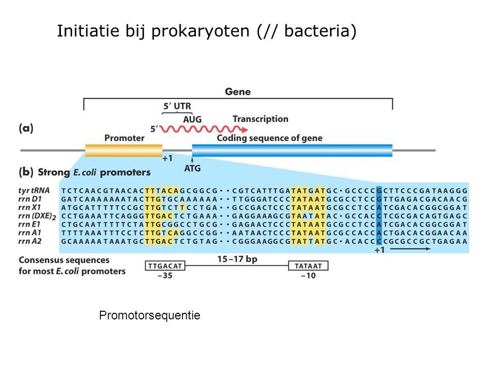 Promotorsequentie Initiatie bij prokaryoten (// bacteria)