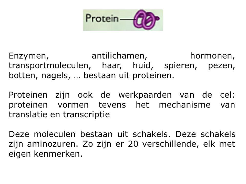 Enzymen, antilichamen, hormonen, transportmoleculen, haar, huid, spieren, pezen, botten, nagels, … bestaan uit proteinen. Proteinen zijn ook de werkpa