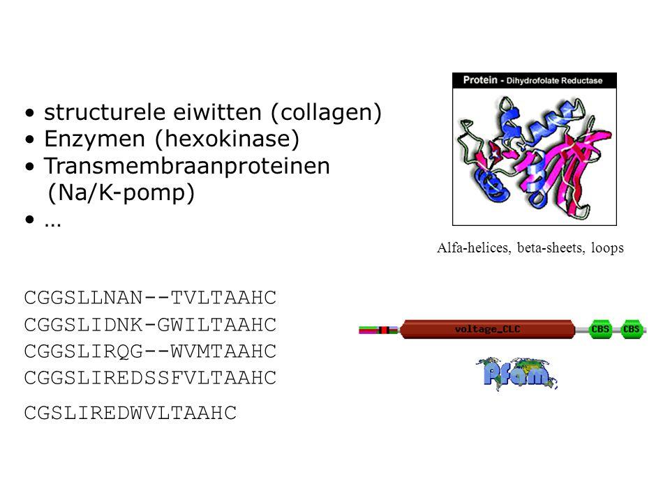structurele eiwitten (collagen) Enzymen (hexokinase) Transmembraanproteinen (Na/K-pomp) … Alfa-helices, beta-sheets, loops CGGSLLNAN--TVLTAAHC CGGSLID