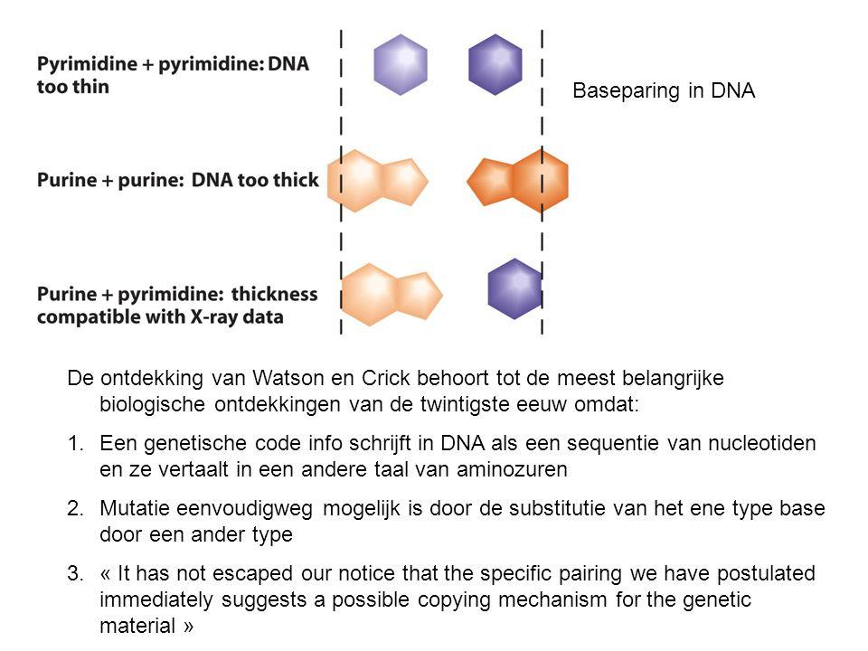 Baseparing in DNA De ontdekking van Watson en Crick behoort tot de meest belangrijke biologische ontdekkingen van de twintigste eeuw omdat: 1.Een gene