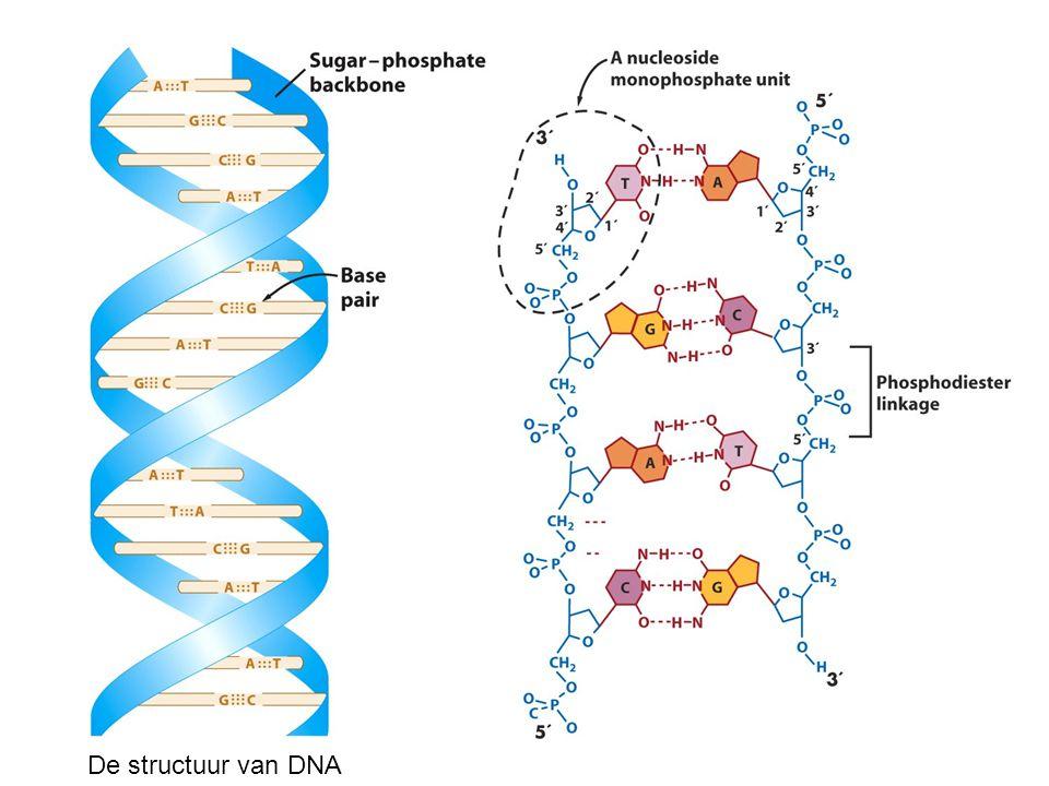 De structuur van DNA