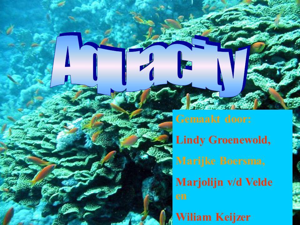 Gemaakt door: Lindy Groenewold, Marijke Boersma, Marjolijn v/d Velde en Wiliam Keijzer