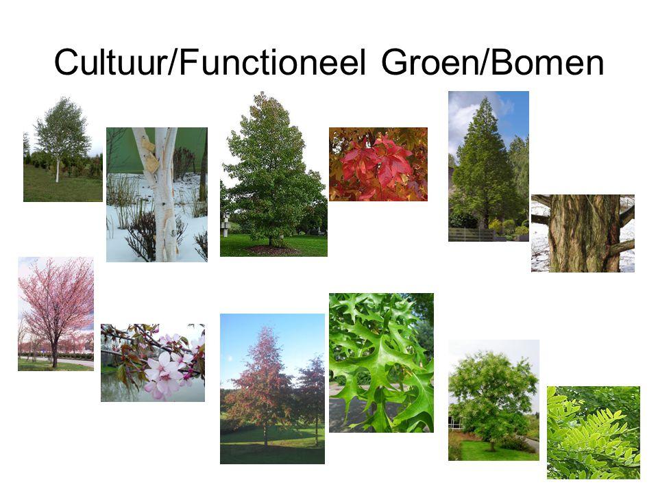 Cultuur/Functioneel Groen/Bomen