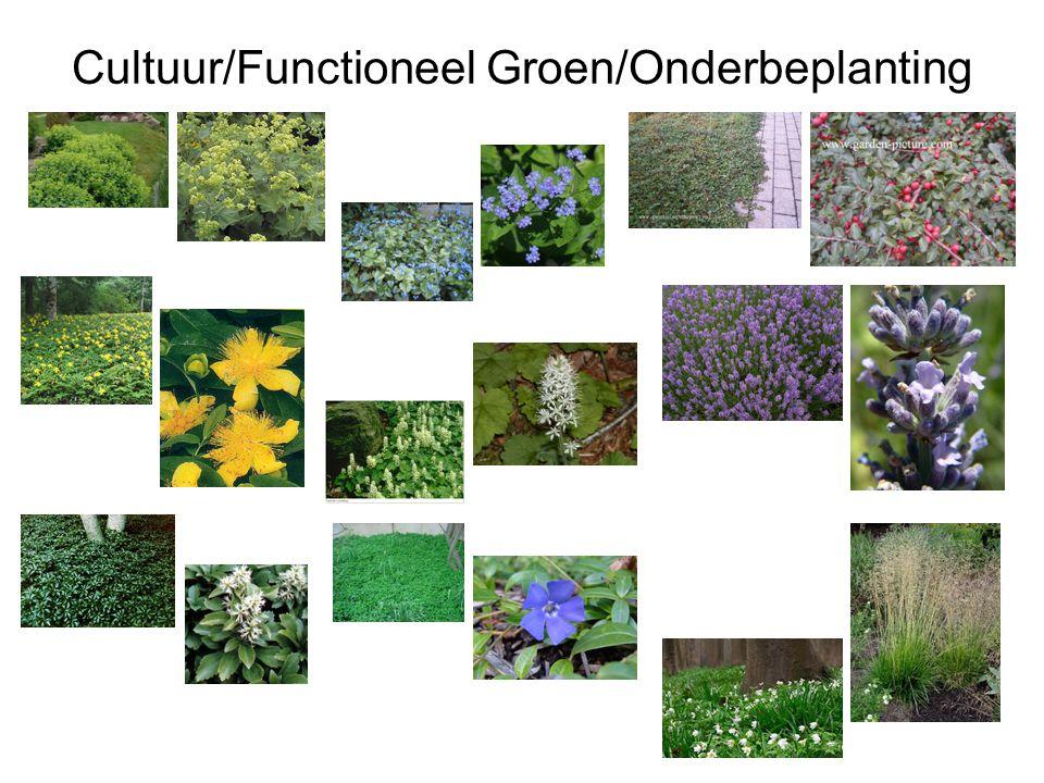 Cultuur/Functioneel Groen/Onderbeplanting