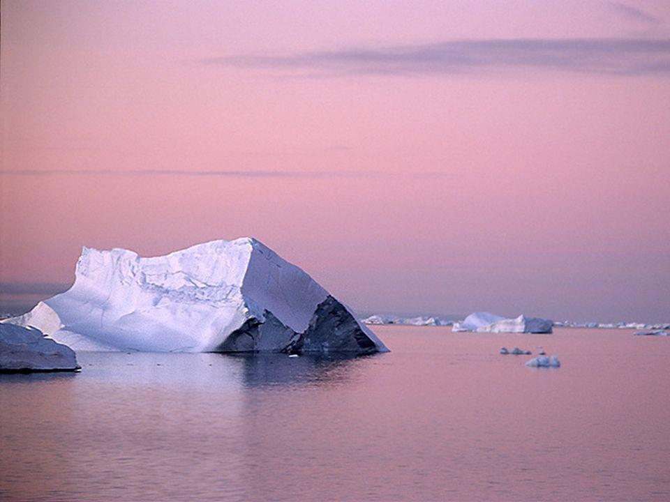 Ondanks het gure weer heeft Antarctica een rijke fauna, die verbazingwekkend goed is aangepast aan de barre weersomstandigheden.