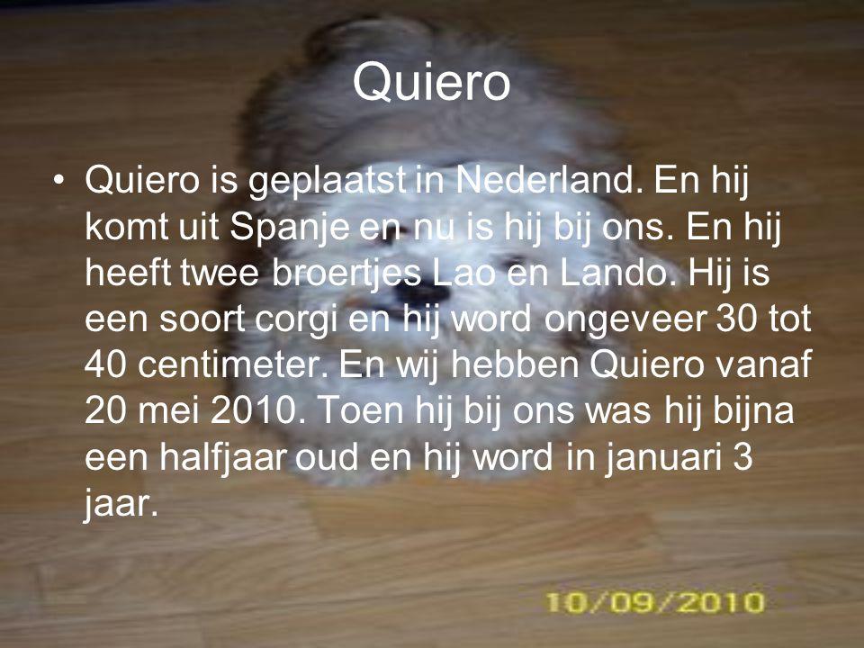 Quiero Quiero is geplaatst in Nederland.En hij komt uit Spanje en nu is hij bij ons.