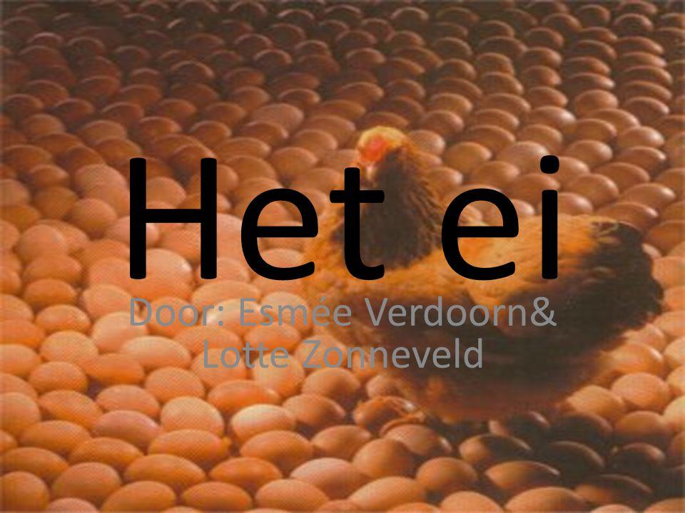 Het ei Door: Esmée Verdoorn& Lotte Zonneveld