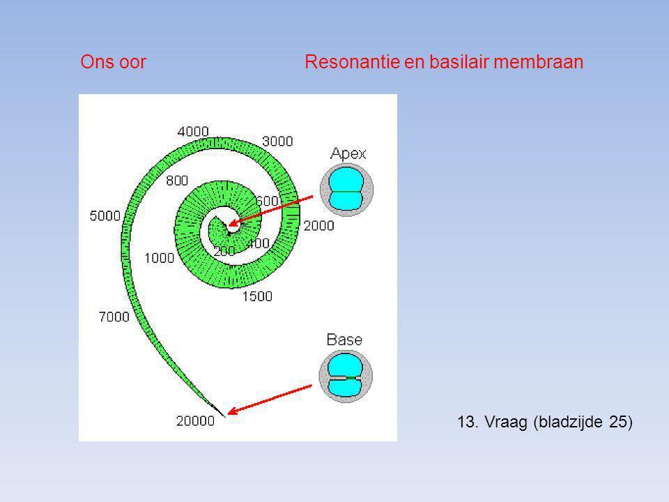 Ons oor Resonantie en basilair membraan 13. Vraag (bladzijde 25)