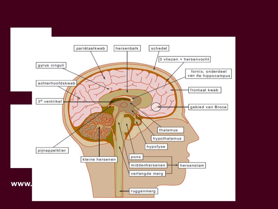 erkt ons brein?erkt ons brein?
