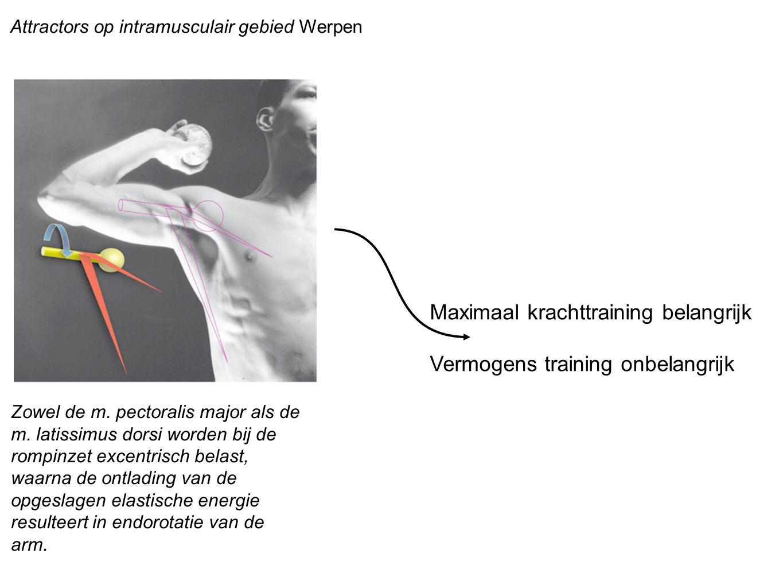 Attractors op intramusculair gebied Werpen Zowel de m. pectoralis major als de m. latissimus dorsi worden bij de rompinzet excentrisch belast, waarna