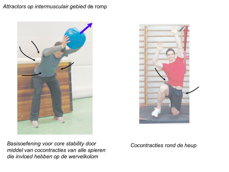 Attractors op intermusculair gebied de romp Basisoefening voor core stability door middel van cocontracties van alle spieren die invloed hebben op de