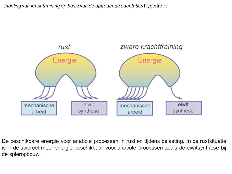 Indeling van krachttraining op basis van de optredende adaptaties Hypertrofie De beschikbare energie voor anabole processen in rust en tijdens belasti