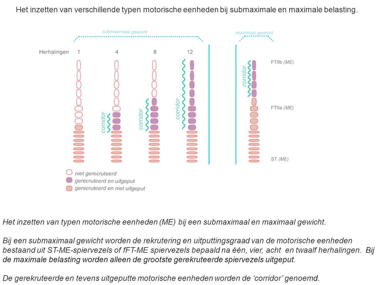 Het inzetten van typen motorische eenheden (ME) bij een submaximaal en maximaal gewicht. Bij een submaximaal gewicht worden de rekrutering en uitputti