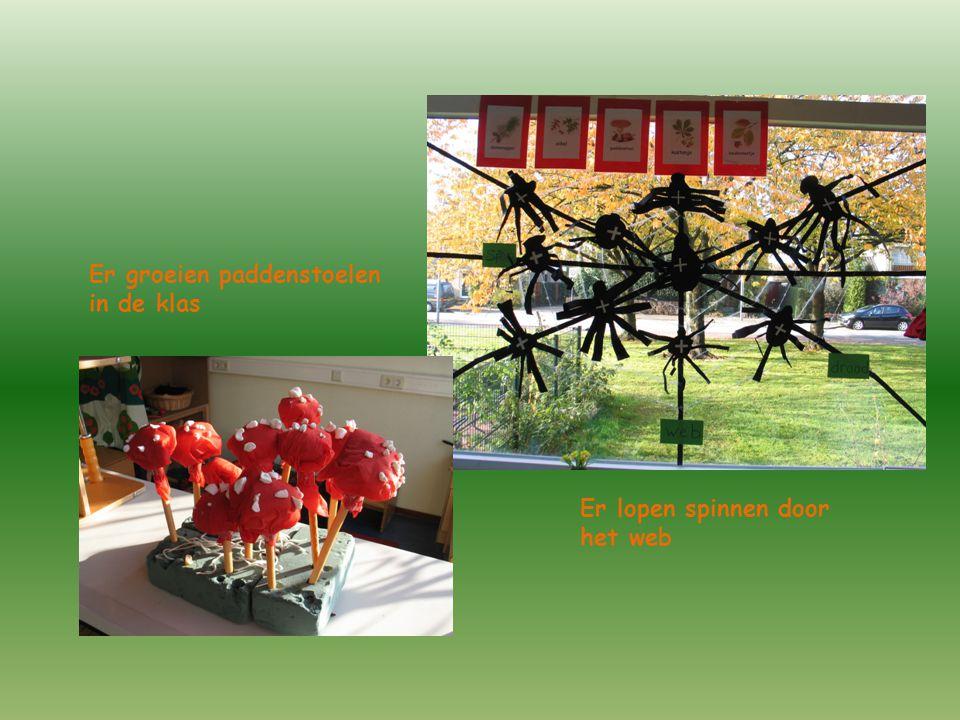 Er groeien paddenstoelen in de klas Er lopen spinnen door het web