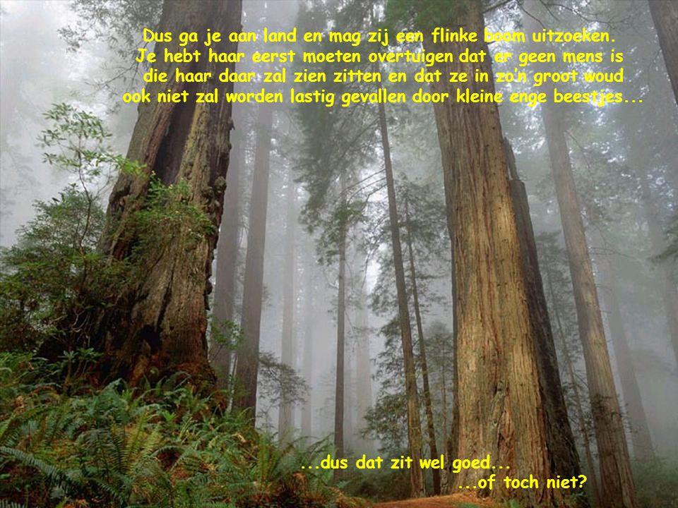 Dus ga je aan land en mag zij een flinke boom uitzoeken. Je hebt haar eerst moeten overtuigen dat er geen mens is die haar daar zal zien zitten en dat