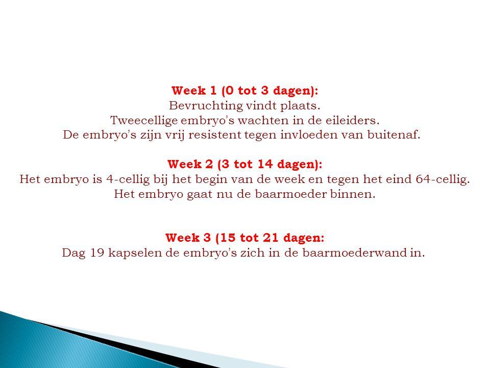 Week 1 (0 tot 3 dagen): Bevruchting vindt plaats. Tweecellige embryo ' s wachten in de eileiders. De embryo ' s zijn vrij resistent tegen invloeden va
