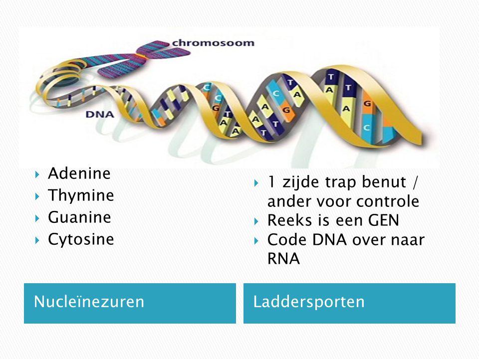 NucleïnezurenLaddersporten  Adenine  Thymine  Guanine  Cytosine  1 zijde trap benut / ander voor controle  Reeks is een GEN  Code DNA over naar RNA