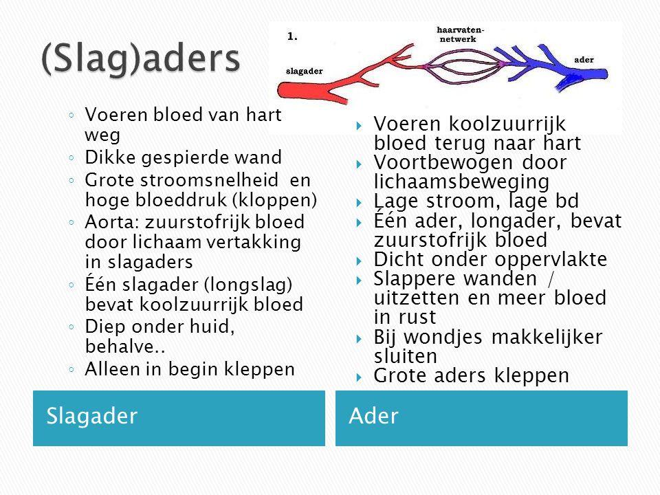 SlagaderAder ◦ Voeren bloed van hart weg ◦ Dikke gespierde wand ◦ Grote stroomsnelheid en hoge bloeddruk (kloppen) ◦ Aorta: zuurstofrijk bloed door li