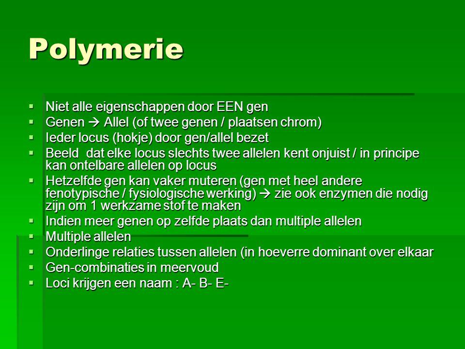 Polymerie  Niet alle eigenschappen door EEN gen  Genen  Allel (of twee genen / plaatsen chrom)  Ieder locus (hokje) door gen/allel bezet  Beeld d