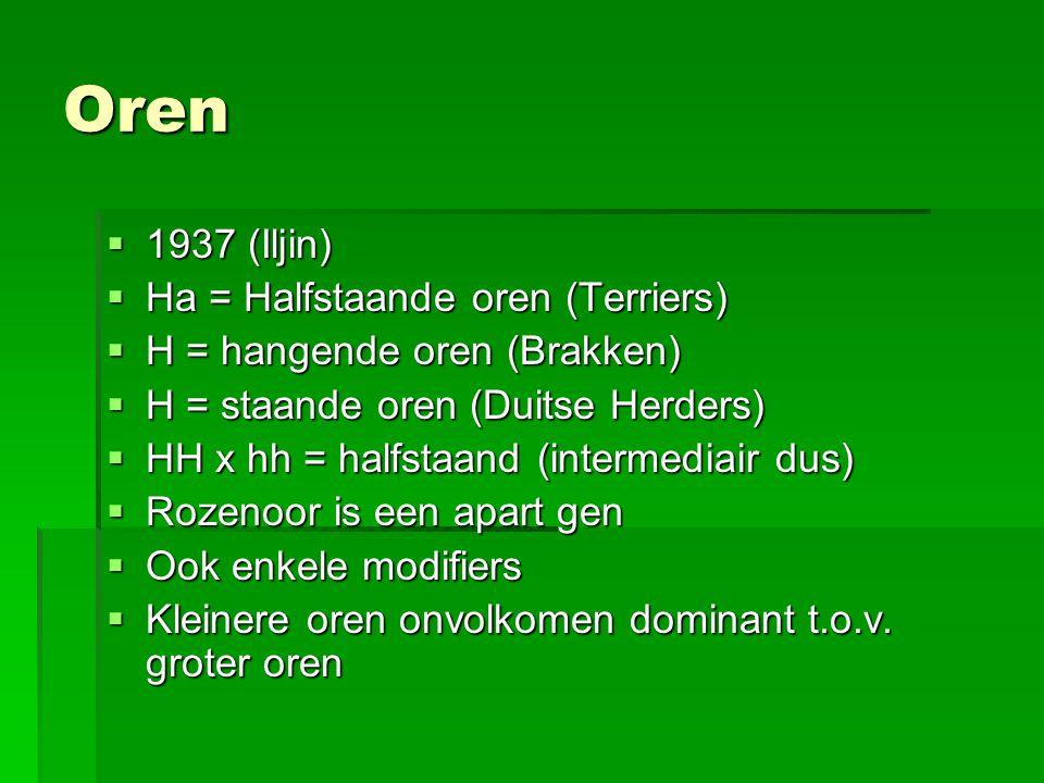 Oren  1937 (Iljin)  Ha = Halfstaande oren (Terriers)  H = hangende oren (Brakken)  H = staande oren (Duitse Herders)  HH x hh = halfstaand (inter