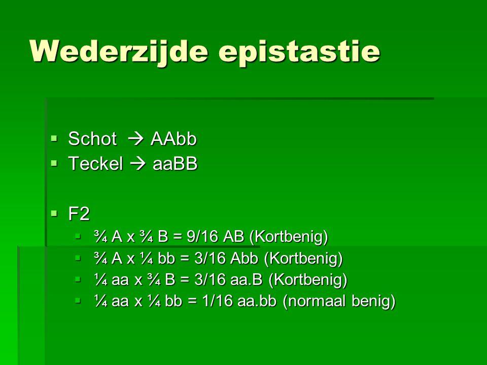 Wederzijde epistastie  Schot  AAbb  Teckel  aaBB  F2  ¾ A x ¾ B = 9/16 AB (Kortbenig)  ¾ A x ¼ bb = 3/16 Abb (Kortbenig)  ¼ aa x ¾ B = 3/16 aa