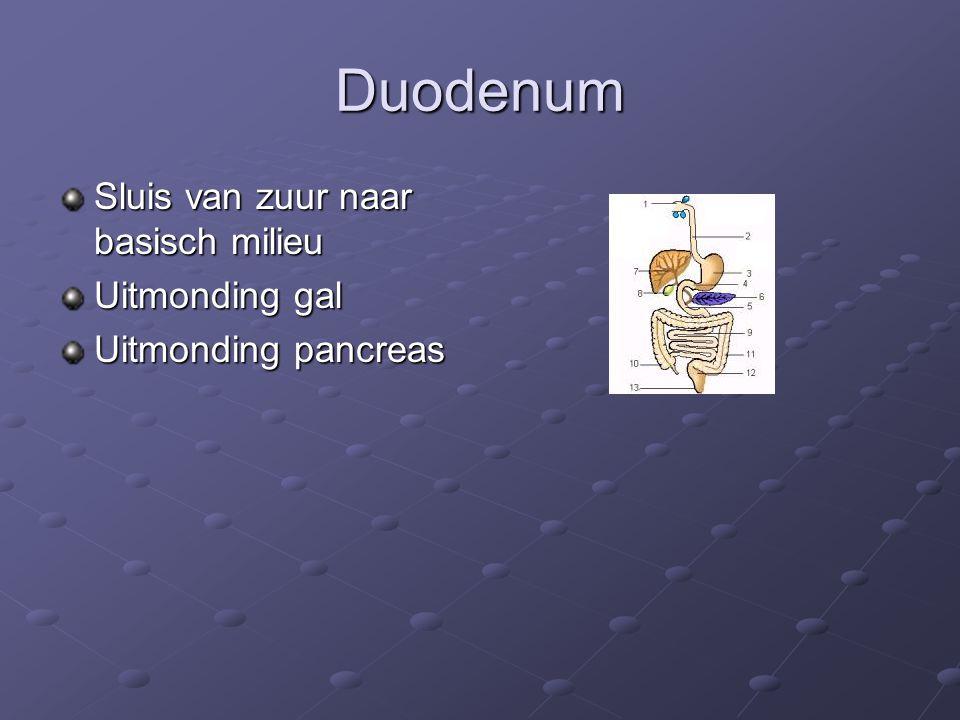 Duodenum Sluis van zuur naar basisch milieu Uitmonding gal Uitmonding pancreas
