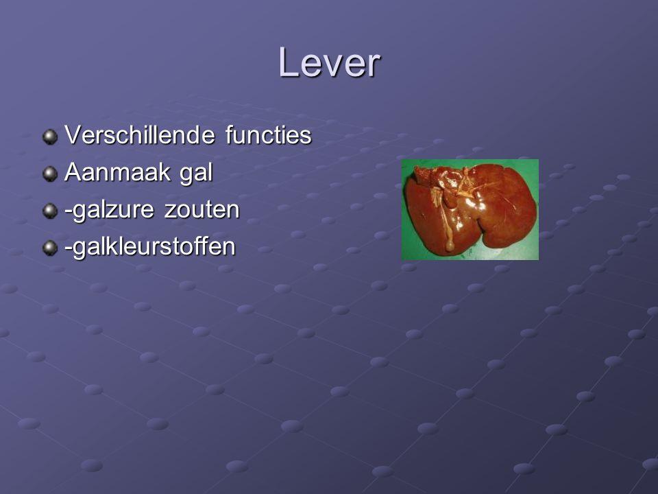 Lever Verschillende functies Aanmaak gal -galzure zouten -galkleurstoffen