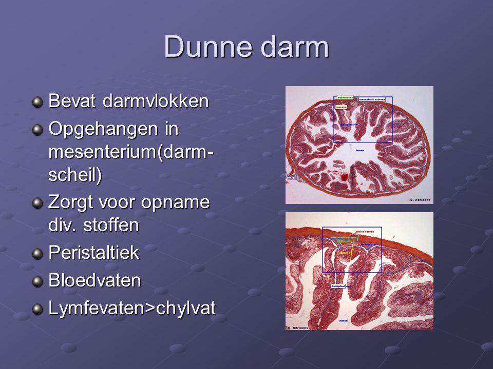 Dunne darm Bevat darmvlokken Opgehangen in mesenterium(darm- scheil) Zorgt voor opname div. stoffen PeristaltiekBloedvatenLymfevaten>chylvat