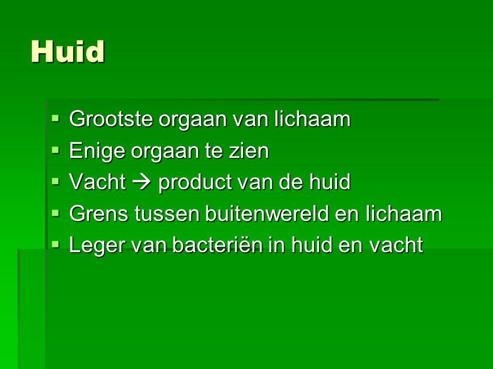 Huid  Grootste orgaan van lichaam  Enige orgaan te zien  Vacht  product van de huid  Grens tussen buitenwereld en lichaam  Leger van bacteriën i