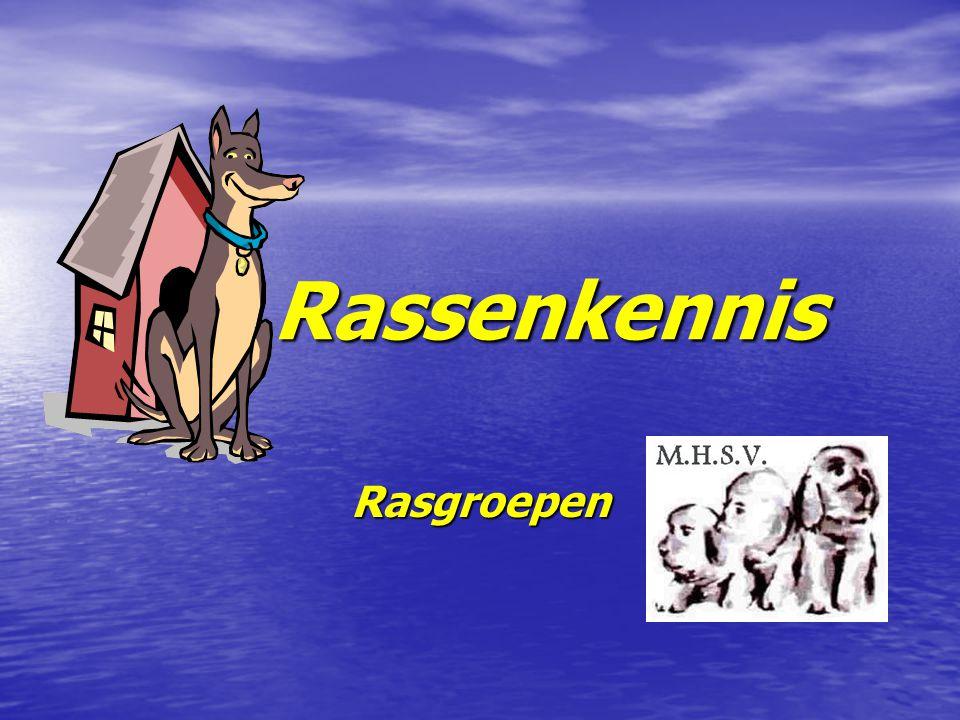 De groepen FCI indeling Herdershonden en veedrijvers Herdershonden en veedrijvers Pinschers en Schnauzers, Molossers en Sennenhonden Pinschers en Schnauzers, Molossers en Sennenhonden Terriërs Terriërs Dashonden Dashonden Spitzen en Oertypen Spitzen en Oertypen Lopende Honden en Zweethonden Lopende Honden en Zweethonden Voorstaande Honden Voorstaande Honden Retrievers en Waterhonden Retrievers en Waterhonden Gezelschapshonden Gezelschapshonden Windhonden Windhonden