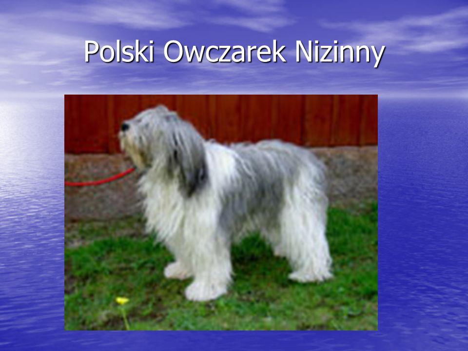 Polski Owczarek Nizinny