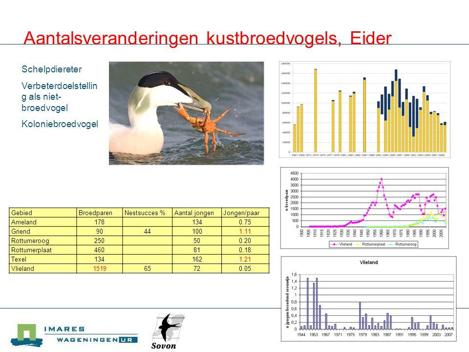 IMARES Aantalsveranderingen kustbroedvogels, Eider Schelpdiereter Verbeterdoelstellin g als niet- broedvogel Koloniebroedvogel GebiedBroedparenNestsuc