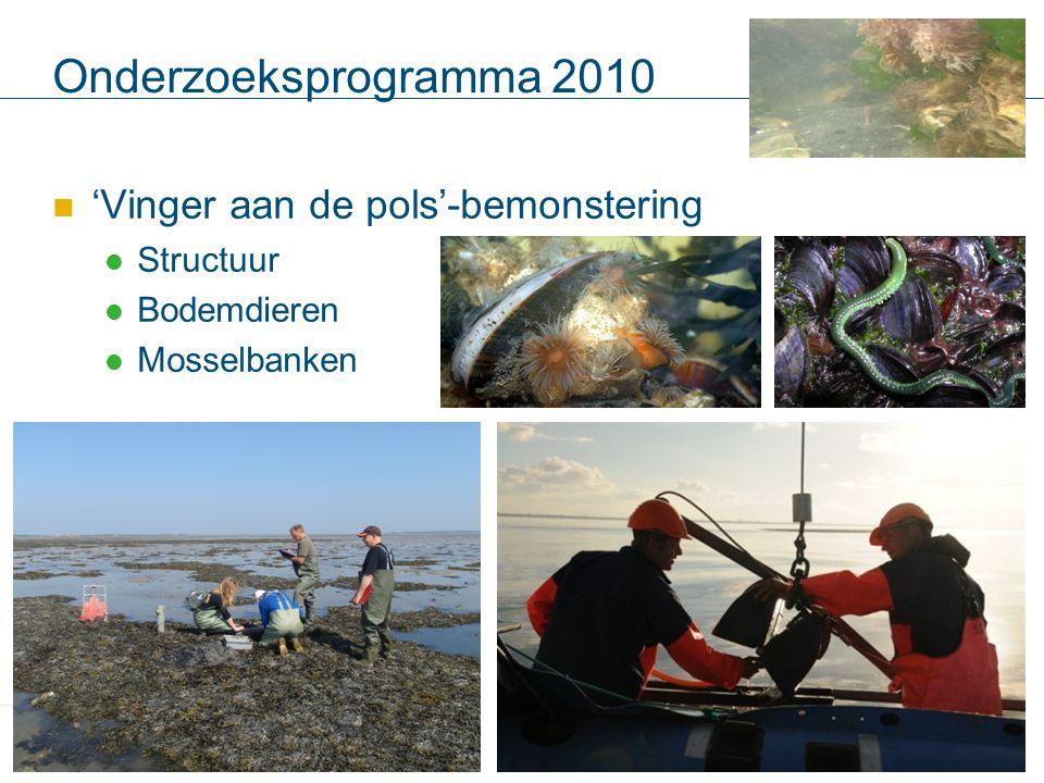 Onderzoeksprogramma 2010 'Vinger aan de pols'-bemonstering Structuur Bodemdieren Mosselbanken