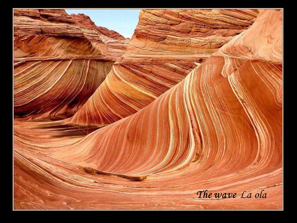 The wave La ola