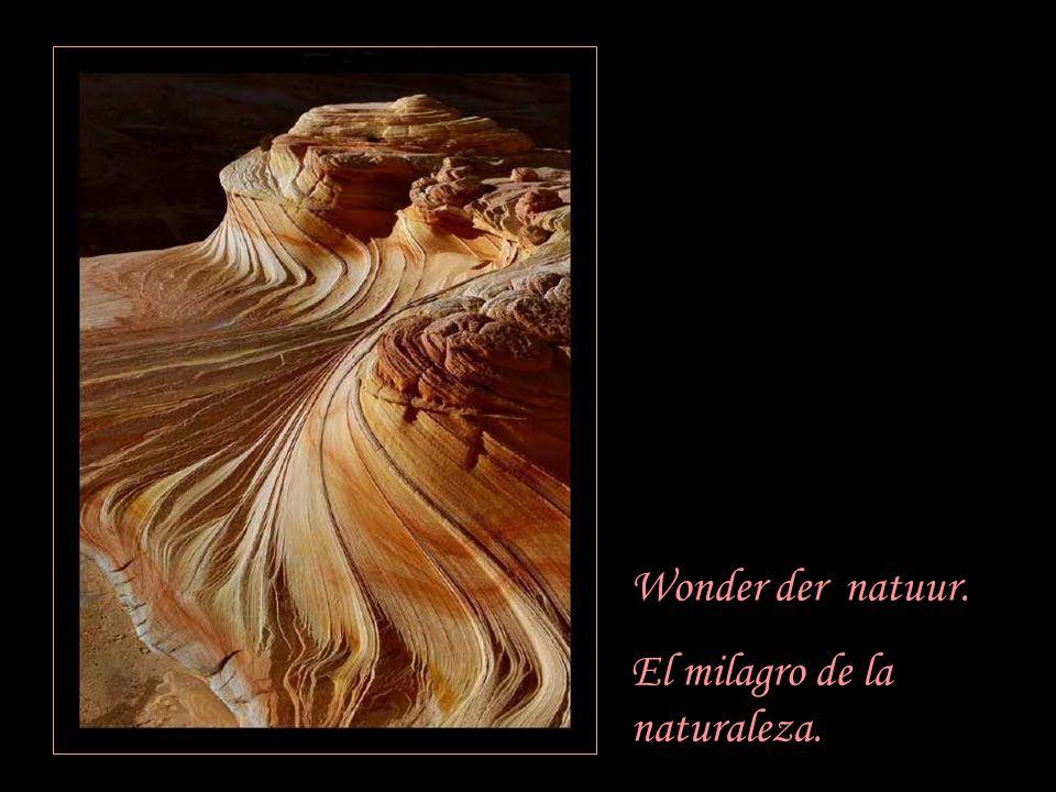 Wonder der natuur. El milagro de la naturaleza.