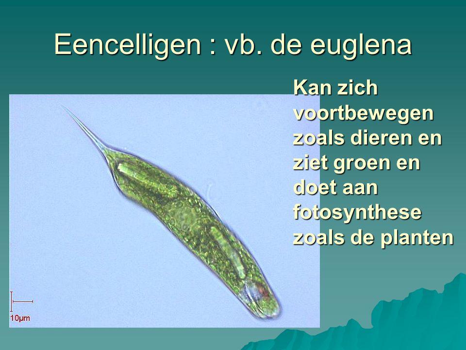 Eencelligen : vb. de euglena Kan zich voortbewegen zoals dieren en ziet groen en doet aan fotosynthese zoals de planten