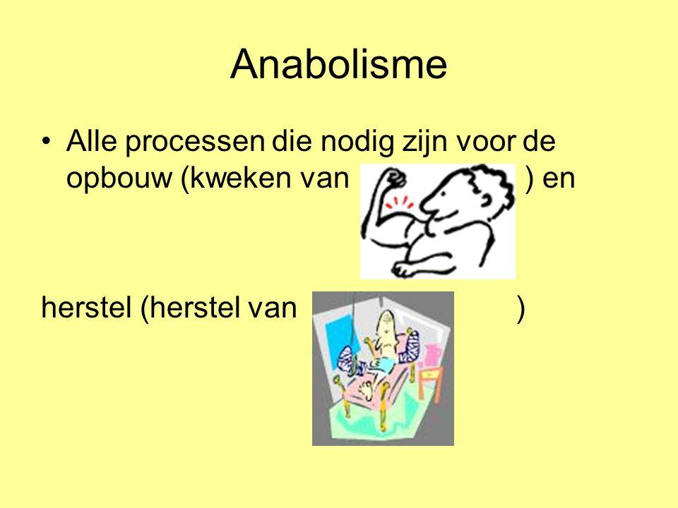 Verbruik van stoffen Stofwisseling = opbouwstofwisseling + afbraakstofwisseling Of Metabolisme = Anabolisme + katabolisme