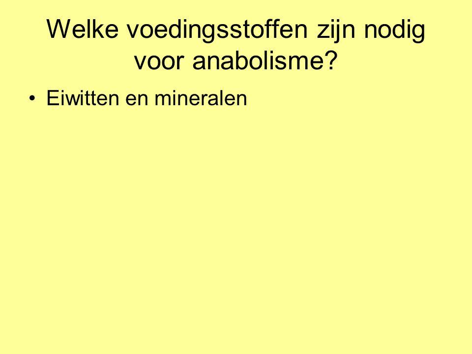 Wat is anabolisme.