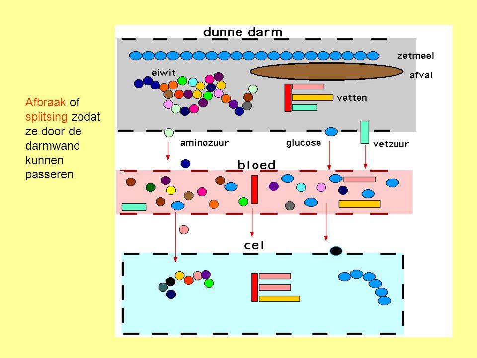 Hoe stroomt lymfe.Door een eigen vatensysteem Het stroomt in de richting van het hart.