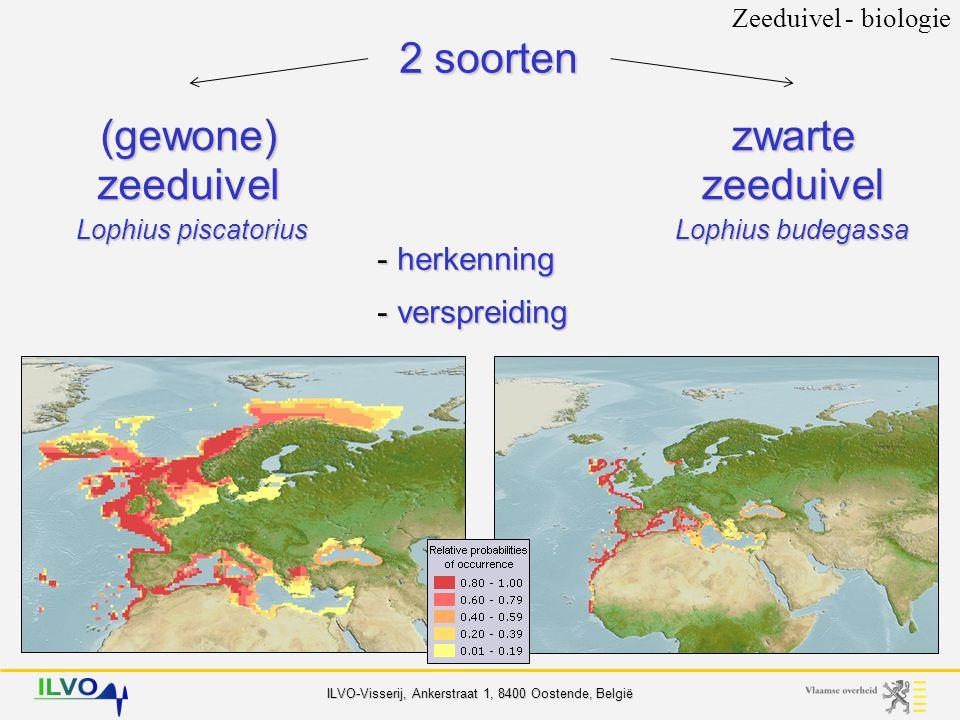 ILVO-Visserij, Ankerstraat 1, 8400 Oostende, België 2 soorten Zeeduivel - biologie (gewone) zeeduivel zwarte zeeduivel Lophius piscatorius Lophius budegassa - herkenning - verspreiding - biologie voeding