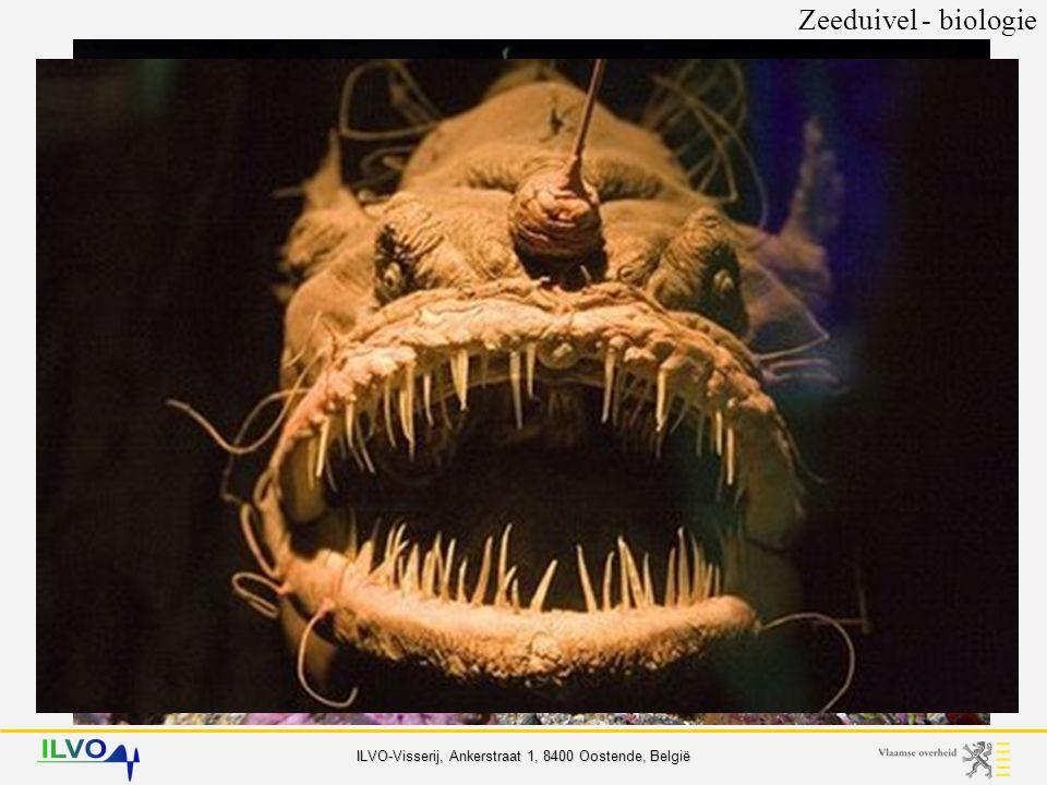 ILVO-Visserij, Ankerstraat 1, 8400 Oostende, België 2 soorten Zeeduivel - biologie (gewone) zeeduivel zwarte zeeduivel Lophius piscatorius Lophius budegassa - herkenning - verspreiding - biologie voedingvoortplanting