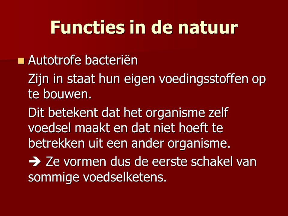 Functies in de natuur Autotrofe bacteriën Autotrofe bacteriën Zijn in staat hun eigen voedingsstoffen op te bouwen. Dit betekent dat het organisme zel