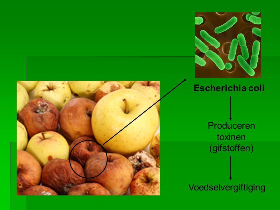 Escherichia coli Produceren toxinen (gifstoffen) Voedselvergiftiging